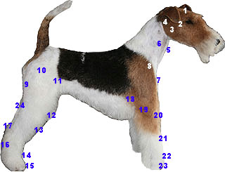Geoyce fox-terrier